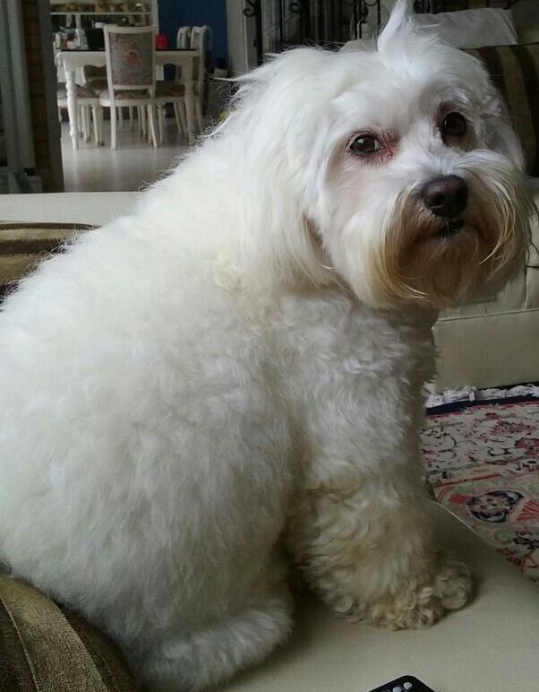 Os cães como coautores do nosso processo de individuação Psicologia Junguiana